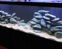 Пресноводный аквариум в квартире