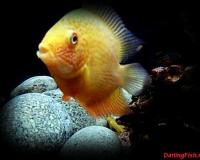 Рыбка в аквариум