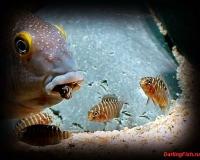 Рыбки в аквариум