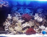 Морской аквариум 750 литров