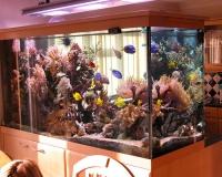 Большой морской аквариум