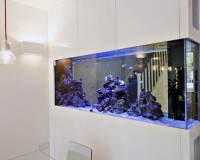 Морской аквариум в доме
