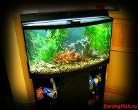 Пресный аквариум дома