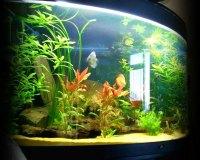 Пресноводный аквариум