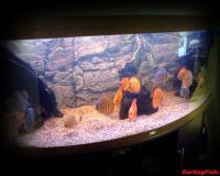 Пресноводный аквариум в кабинете