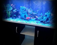 Пресноводный аквариум дома