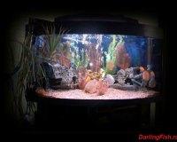 Пресноводный аквариум в интерьере