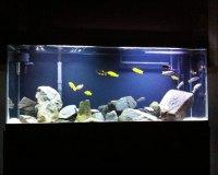 Пресноводный аквариум в интерьере квартиры