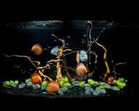 Пресноводный аквариум в кабинет