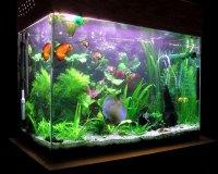 Пресноводный аквариум в доме