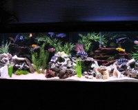 Пресноводный аквариум для дома