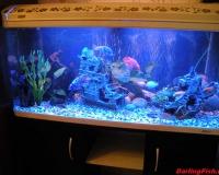 Пресный аквариум в офисе