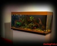 Пресный аквариум