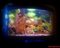 Пресный аквариум в квартире