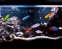 Пресный аквариум в квартиру
