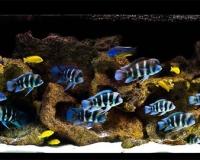 Пресноводный аквариум в офис