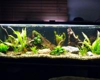 Пресный аквариум в интерьере квартиры