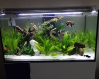 Пресноводный аквариум в офисе
