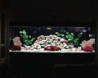 Пресный аквариум в дом