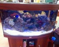 Морской аквариум в квартире