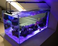 Морской аквариум в интерьере дома