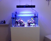 Небольшой морской аквариум